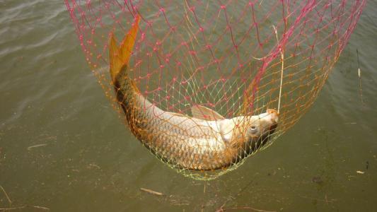 夏季钓鲤鱼的一些技巧